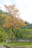 árvore da cor Imagens de Stock Royalty Free