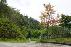 árvore da cor Fotos de Stock Royalty Free