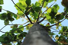 ?rvore da escalada fotografia de stock