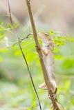 Árvore da escalada do dragão Fotos de Stock