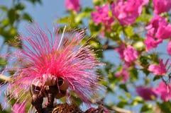 Árvore da escova de rapagem Imagem de Stock