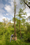 Árvore da estaca do homem novo Foto de Stock