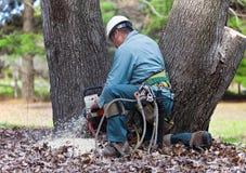 Árvore da estaca do trabalhador com serra de cadeia Fotos de Stock
