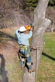Árvore da estaca do trabalhador com serra de cadeia Imagem de Stock Royalty Free