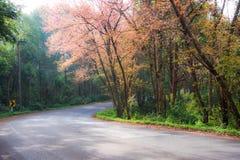Árvore da estrada Fotos de Stock