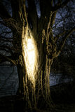 Árvore da fantasia foto de stock royalty free