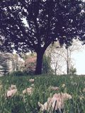 Árvore da flor Foto de Stock Royalty Free