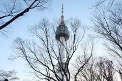 árvore da flor de cerejeira na flor completa na torre de Seoul, Coreia imagem de stock royalty free