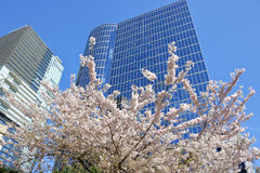 Árvore da flor e construções modernas da cidade Imagem de Stock