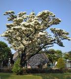 Árvore da flor da estação para localizar na área de Memorial Park da paz da cidade de Taipei imagens de stock royalty free