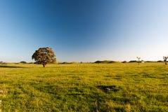 Árvore da flor na exploração agrícola Fotos de Stock Royalty Free