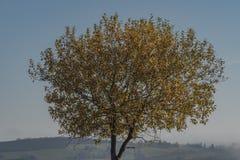 Árvore da folha com céu azul e inverso agradáveis no vale imagem de stock