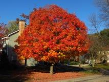 Árvore da folhagem de outono Foto de Stock