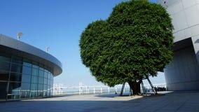 Árvore da forma do coração fora do museu de ciência, Macau imagens de stock