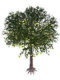 Árvore da goiaba de morango - 3D rendem Imagens de Stock Royalty Free