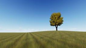 Árvore da grama uma do outono única ilustração do vetor