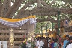 A árvore da iluminação Fotos de Stock Royalty Free