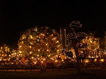 Árvore da iluminação da noite no parque foto de stock