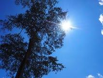 Árvore da luz de céu Fotografia de Stock