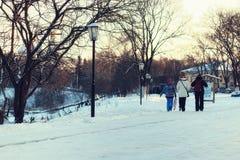Árvore da luz de rua do inverno Foto de Stock Royalty Free