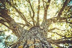 Árvore da luz solar Fotografia de Stock