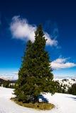 Árvore da maravilha Imagem de Stock