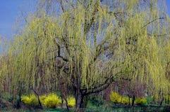 Árvore da mola foto de stock