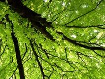Árvore da mola Imagens de Stock
