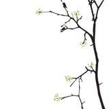 Árvore da mola com pássaros foto de stock royalty free