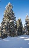 Árvore da montanha fotografia de stock royalty free