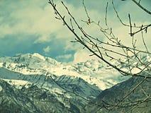 Árvore da montanha do gelo Fotografia de Stock Royalty Free
