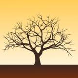 Árvore da morte Imagem de Stock Royalty Free