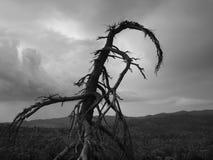 Árvore da morte Fotografia de Stock Royalty Free