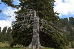 Árvore da morte imagens de stock royalty free