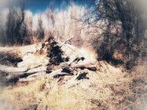 A árvore da morte dos bens e o mal Imagem de Stock