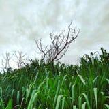 Árvore da morte foto de stock royalty free