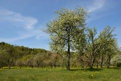 Árvore da natureza Imagens de Stock Royalty Free