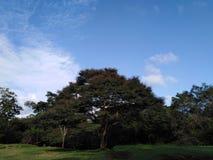Árvore da natureza com céu azul imagem de stock