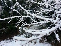 Árvore 2 da neve Fotografia de Stock Royalty Free