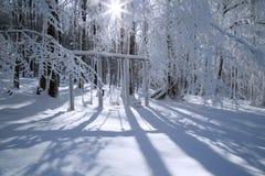 Árvore da neve Fotos de Stock Royalty Free
