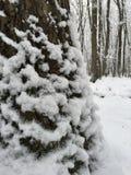 Árvore da neve Imagem de Stock