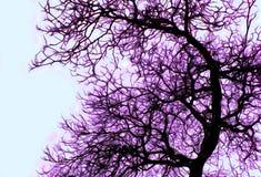 Árvore da neve Fotografia de Stock