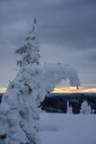 Árvore da neve do inverno Foto de Stock