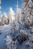 Árvore da neve do inverno imagem de stock