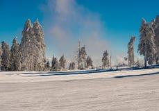 Árvore da neve e céu azul Imagens de Stock Royalty Free