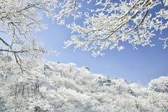 Árvore da neve no céu azul Fotografia de Stock Royalty Free