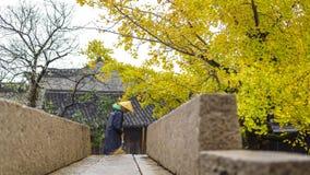 Árvore da nogueira-do-Japão que varre a terra fotografia de stock