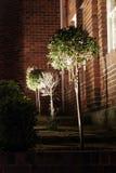 Árvore da noite imagem de stock royalty free