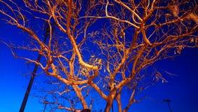 Árvore da noite fotos de stock royalty free