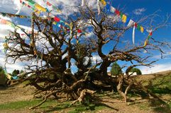 Árvore da oração Fotografia de Stock